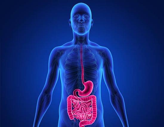 Healthy Living/tips To Make Good Digestive System 21397.html पाचन क्रिया को  दुरुस्त करने के कुछ खास उपाय - lifeberrys.com हिंदी